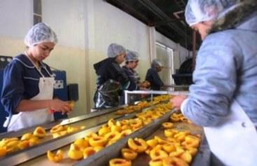 Foro del Durazno de Industria: se debate el futuro de un sector que da trabajo a 45.000 mendocinos