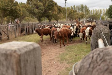 Comunicado de la Unión Industrial de Mendoza en relación a la suspensión de las exportaciones de carne
